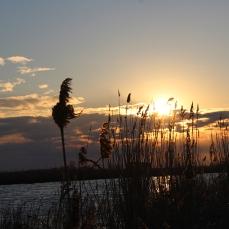 Canal del Migjorn, delta de l'Ebre