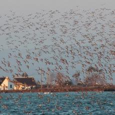 Barraques i ocells
